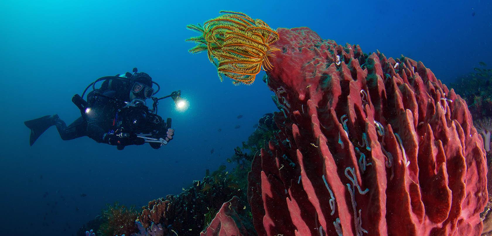 Underwater cameraman Klemens Gann Bluewaterfascination