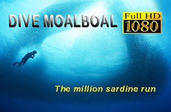 Dive Moalboal