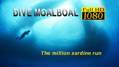 Dive Moalboal