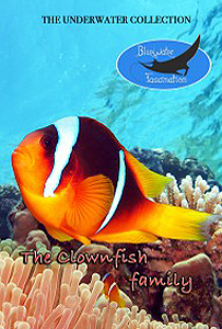 clownfish family underwater dvd