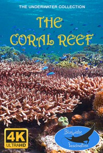 the_coral_reef