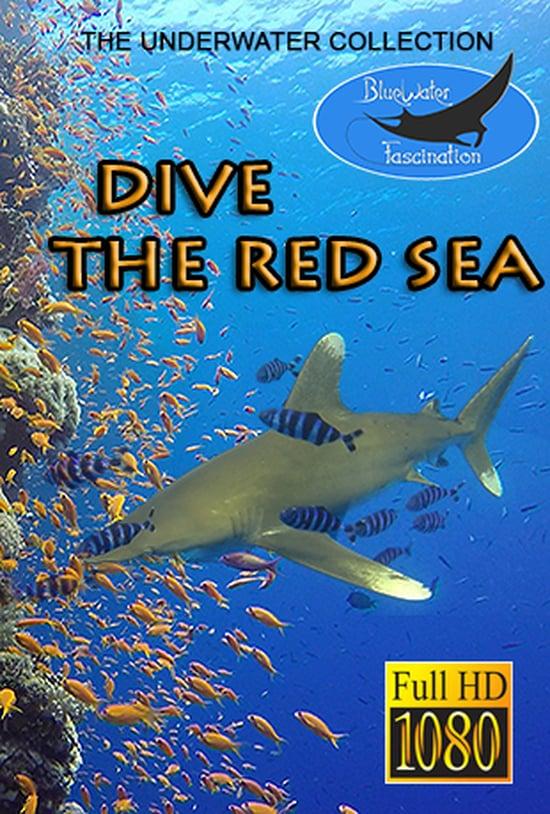 Dive Red Sea
