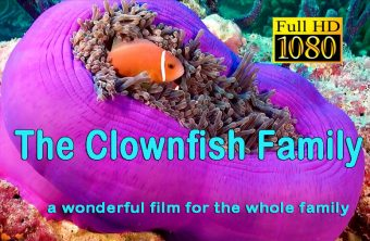 The Clownfish Family
