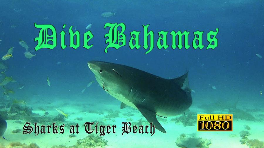 Dive Bahamas