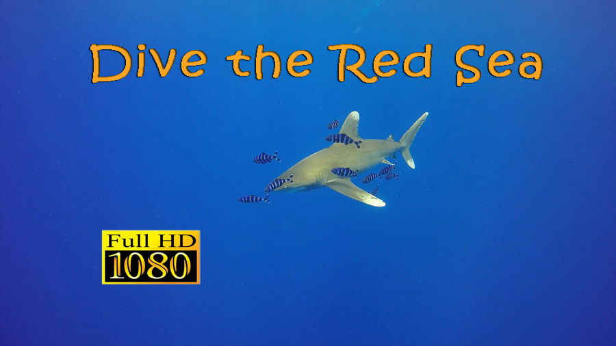 Dive the Red Sea