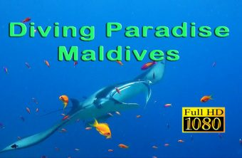 Diving Paradise Maldives