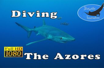 Diving the Azores